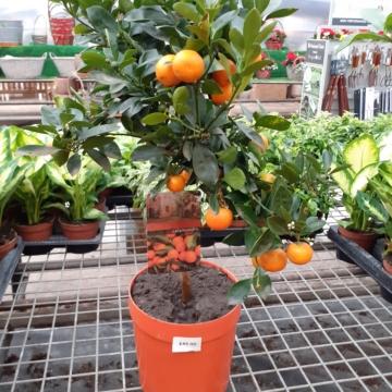 Fruit Tree's - Ravensworth Nurseries